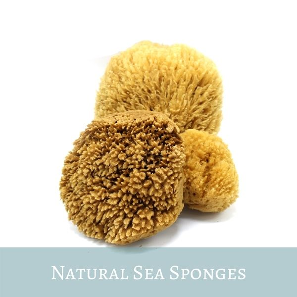 Natural Sea Sponges: Bath, Shower, Facial or Exfoliating
