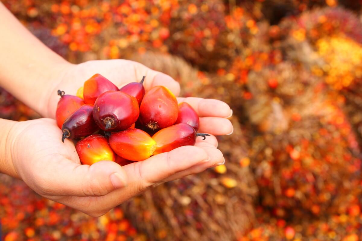 Is Palm Oil Bad For The Environment?