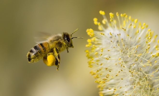 Why Saving Bees Now is Important for Our Future Survival