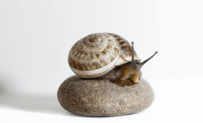 Would You Use Snail Slime in Your Skincare Routine?
