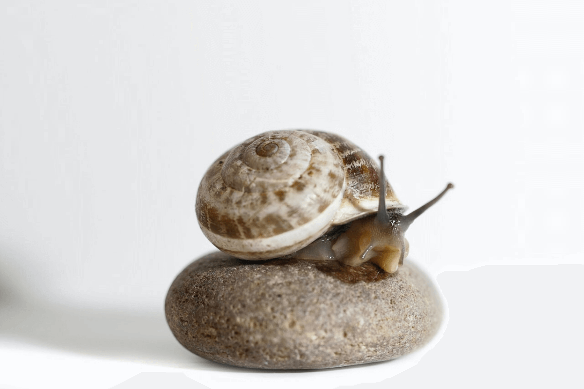 Would You Use Snail Slime in Your Skincare Routine
